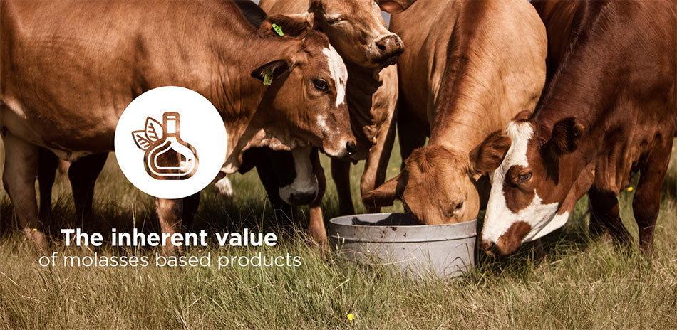 COST-EFFECTIVE ANIMAL NUTRITION SOLUTIONS